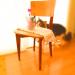 椅子の上に花、後ろに猫