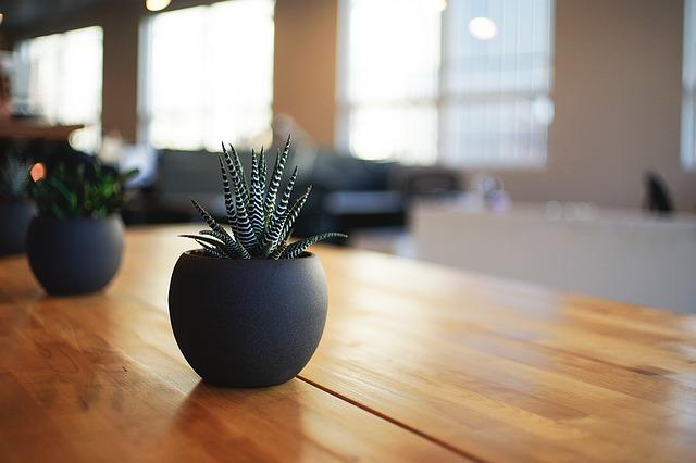 テーブルの上に置かれたサンスベリア