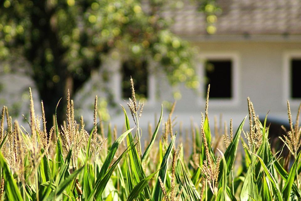 使われずに雑草が生えた土地